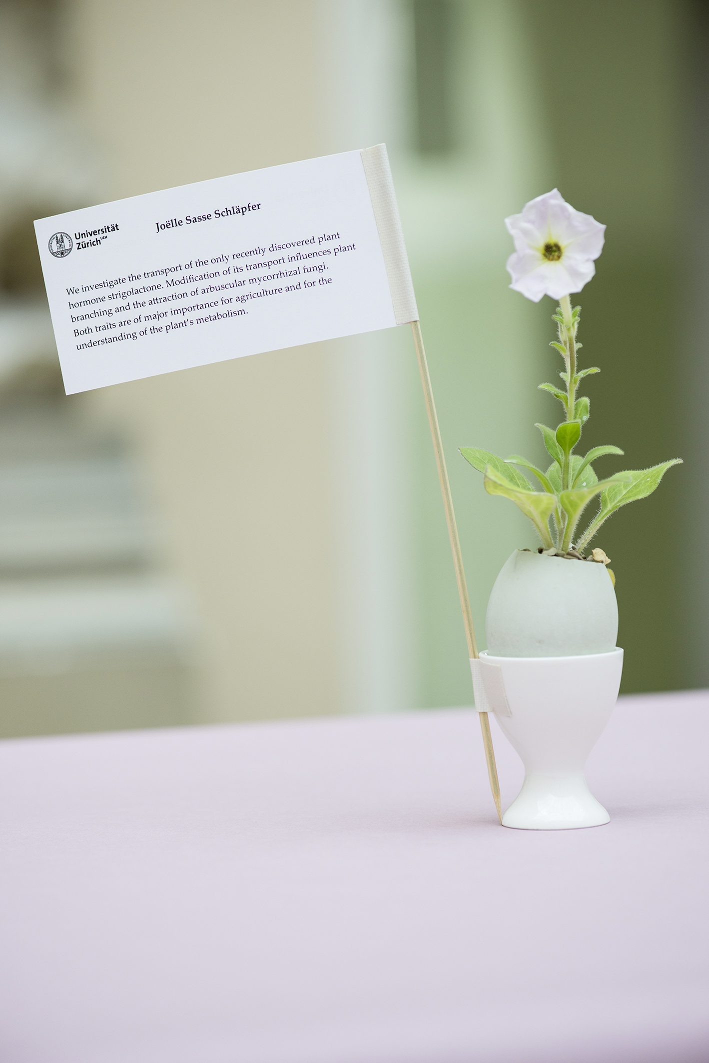 Joelle Sasse Schläpfer, Department of Plant and Microbial Biology: Using petunia (like the one in the picture) as a plant model, we investigate the transport of the only recently discovered plant hormone strigolactone. Modification of its transport influences plant branching and the attraction of arbuscular mycorrhizal Fungi. Both traits are of major importance for agriculture and for the understanding of the plant's metabolism. Foto: Brüderli